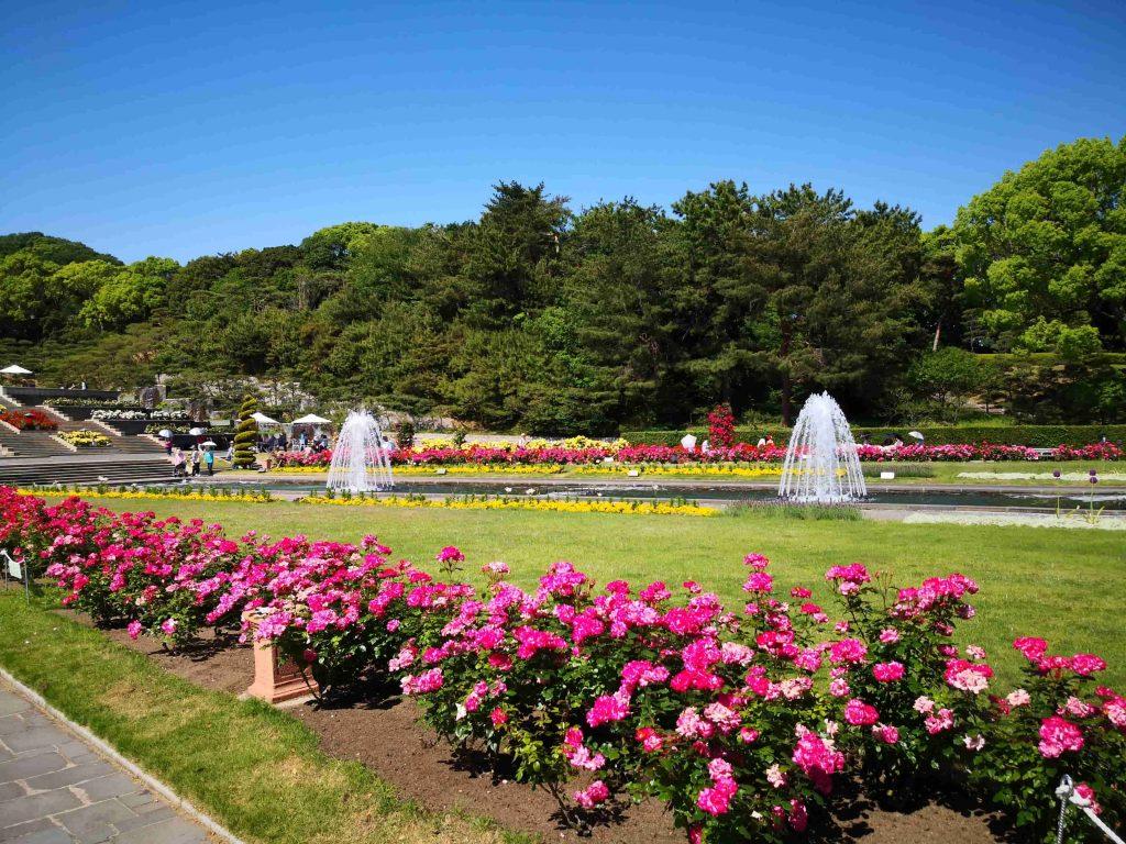 須磨離宮公園バラ園