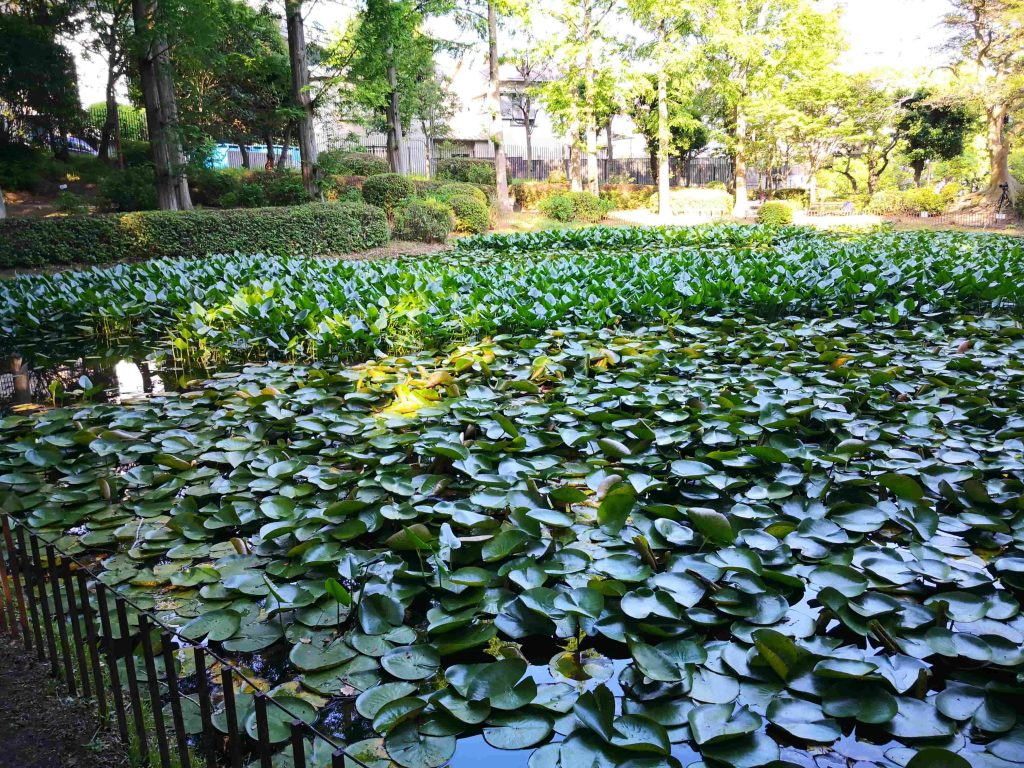須磨離宮公園の新池